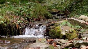 Calm creek waterfall deep in the woods stock video footage
