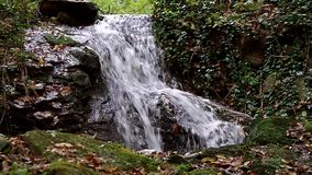 Calm creek waterfall deep in the woods stock footage