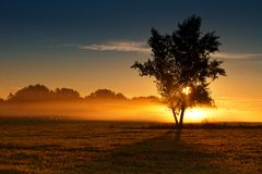 Calm fog morning. Lonely tree in the mist of dawn Royalty Free Stock Image