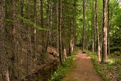 Calm forest path Royalty Free Stock Photos