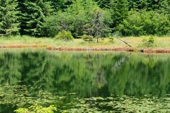 Calm forest pond Stock Image