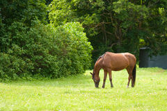 Calm Horse, Rural Scene Stock Photos