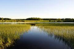 Calm lake. Beautiful lake in Sweden with landscape Royalty Free Stock Photography