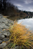 A calm lake in Autumn. Yellow grass and large rocks dot the shorline by this calm lake Royalty Free Stock Image