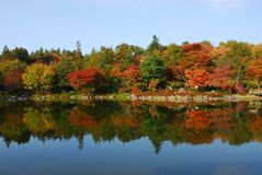 Calm lake autumn foliage Stock Photography