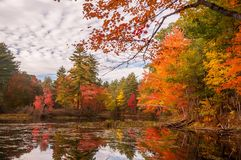 A calm lake in the forest with brightly colored autumn trees and reflections in the water. USA. Maine royalty free stock photos