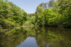 Calm Lake in Green Forest Under Blue Sky Stock Images