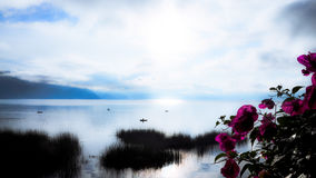 Calm lake. In the morning with flowers Stock Photo