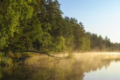 Lake with fog during early morning. Calm lake with relfection and fog during early morning in finland royalty free stock photo