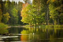 Calm lake. Texture conceptual images Royalty Free Stock Photos