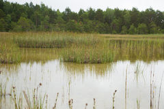 A calm landscape of a grassy lake shore in an overcast day Stock Photos
