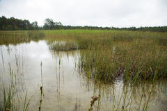 A calm landscape of a grassy lake shore in an overcast day Stock Photo