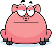 Calm Little Pig Royalty Free Stock Image