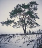 Calm and Lonely Tree Silhouette in Winter Day - vintage look edi. Calm and Lonely Pine Tree Silhouette in Cold Winter Day in December with a Snow in a Foreground Stock Image
