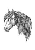 Calm looking horse head sketch with curly mane. Stock Photography