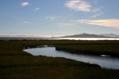 The Calm of the Marsh Stock Image