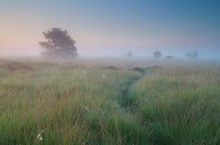 Calm misty summer sunrise Royalty Free Stock Image