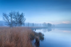 Calm morning over wild swamp Stock Photography