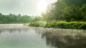 Calm morning at the river. And green trees stock video