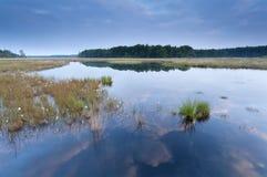 Calm morning on wild lake Stock Image