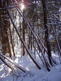 Calm morning in the woods. This was taken in snow-covered woods outside Toronto, Canada around Christmas time Stock Photo
