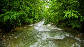 Calm Mountain River Flowing Down Among Greenery In stock video