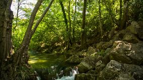 Calm Mountain River Flowing In Green Forest. Picturesque view of tops of green trees in the forest with sunlight shining through them to the calm mountain river stock video