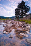 Calm mountain river landscape summer Stock Images