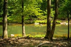 Calm Mountain Stream Royalty Free Stock Image