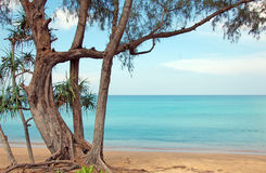 Calm in the ocean. View of the calm peaceful and serene ocean from a pristine beach by a sea breed tree royalty free stock photos