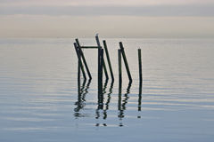 Calm Ocean with Pylons. Calm and serene ocean water reflecting multiple pylons Royalty Free Stock Images