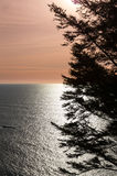 Calm ocean at sunset with tree Royalty Free Stock Photography
