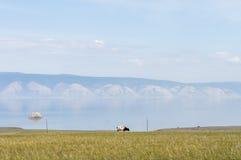 Calm. Olkhon island, lake Baikal and the cow Royalty Free Stock Photography