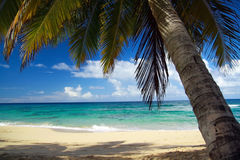 Calm palm on caribbean beach Royalty Free Stock Images