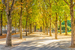 Calm park near the Champs Elysess Stock Images