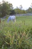 Calm Pasture Royalty Free Stock Photography