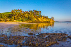 Sunrise Time at Scandrett Beach Auckland New Zealand. Calm and Peaceful During Low Tide Royalty Free Stock Photos