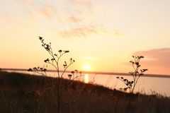 A calm pink sunset on the shore. Of the estuary. Flowers and spiders against the background of the setting sun. The atmosphere of a relaxing holiday in nature Royalty Free Stock Photos