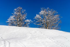 Calm place, white snow and winter trees on ski resort Royalty Free Stock Photography