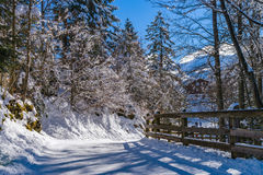 Calm place, white snow and winter trees on ski resort Stock Images