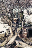 Calm pretty dog is sitting on the boards. Near her booth Royalty Free Stock Photography