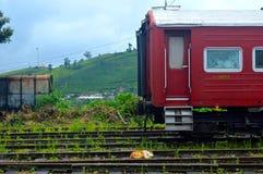 Calm in the rail. A dog sleeping on rails in Sri Lanka royalty free stock image