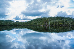 Calm reflections on Lake Dobson at Mount Field National Park, Ta Stock Image