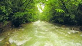 Calm river flowing down among lush greenery in forest. This is a shot of beautiful scenery of a calm mountain river flowing down in the direction off the camera stock video
