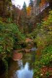 The calm river flows in a beautiful autumn forest royalty free stock image