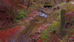 The calm river flows in a beautiful autumn forest stock footage