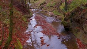 The calm river flows in a beautiful autumn forest stock video footage
