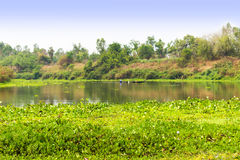 Calm river and green forest, nice peaceful landscape. Royalty Free Stock Image