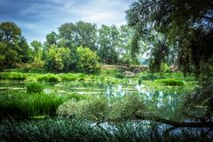 Calm river in the summer morning with green trees on background stock images