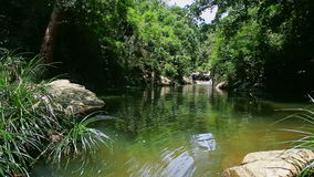 Calm River by Tropical Plants Transparent Water under Sunlight. Panorama of small tranquil river with stones and tropical plants reflected in transparent water stock video
